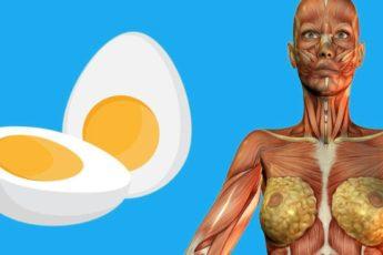 9 потрясающих вещей, происходящих с человеком, если он ест всего 2 яйца на завтрак